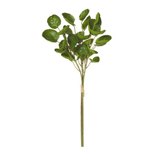 Aralia Pick Bunch x3 38cm Green
